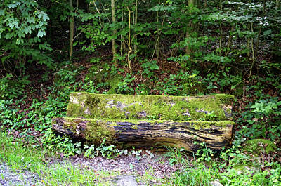 Photograph - Wooden Bench by Michelle Meenawong