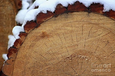 Photograph - Wooden It Be Lovely by Karen Adams