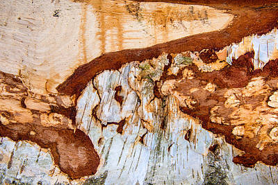Wooden Landscape - Natural Abstract Structure Art Print by Matthias Hauser