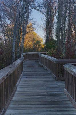 Photograph - Wooden Path by Buddy Scott