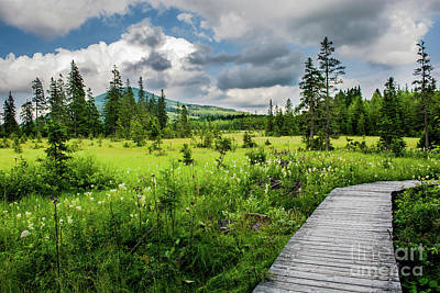 Styria Photograph - Wooden Path Through Moor In Austria by Andreas Berthold
