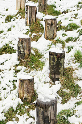 Photograph - Wooden Posts In The Snow by Tom Gowanlock
