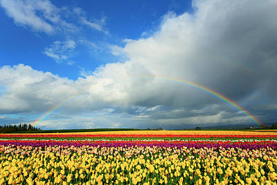 Woodburn Photograph - Wooden Shoe Rainbow by Patrick Campbell