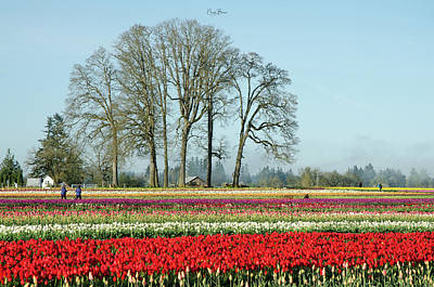 Photograph - Wooden Shoe Tulip Fields 2017 by Nick Boren
