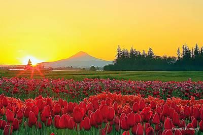 Photograph - Wooden Shoe Tulip Fields Sunrise by Steve Warnstaff