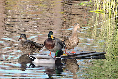 Photograph - Woodies At Neary by Grace Dillon
