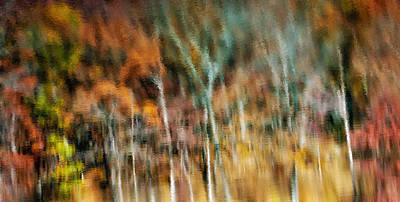 Photograph - Woodland Abstract by James Barber