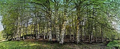 Photograph - Woodland by Alessandro Della Pietra