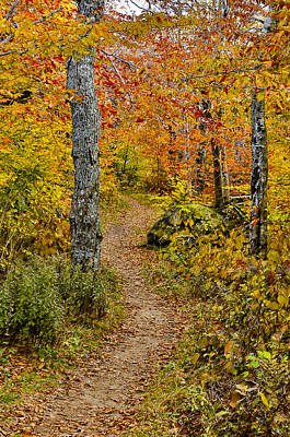 Photograph - Woodland Autumn Trail by Vance Bell