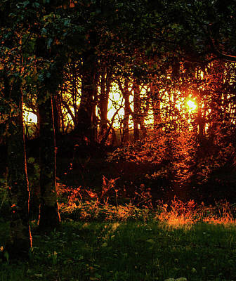 Photograph - Woodland Autumnal Sunset by Richard Brookes