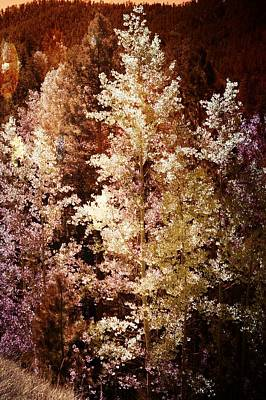 Photograph - Woodland Beauty by Joseph Frank Baraba