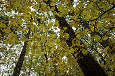Photograph - Woodland Canopy by Andrew Pacheco