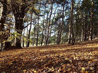 Photograph - Woodland Carpet by John Bailey Photos