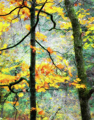 Photograph - Woodland Color by James Barber