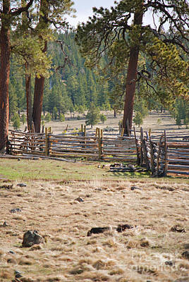 Photograph - Woodland Corral - White Mountains Arizona by Donna Greene