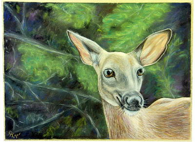 Wall Art - Pastel - Woodland Deer by Carol Iyer