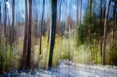Photograph - Woodland Dream by Jennifer Kano