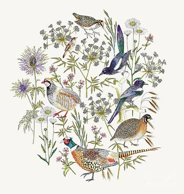 Daisies Drawing - Woodland Edge Birds Placement by Jacqueline Colley