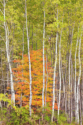 Photograph - Woodland Fall by Alan L Graham