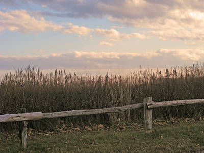 Woodland Fences - Marshes Of Fairfield County Ct Art Print