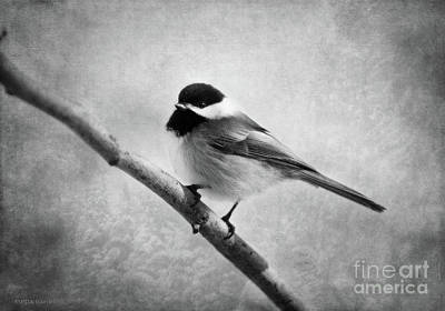Chickadee Digital Art - Woodland Flirt  by Beve Brown-Clark Photography