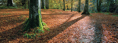 Photograph - Woodland Floor In Autumn by Dave Bowman