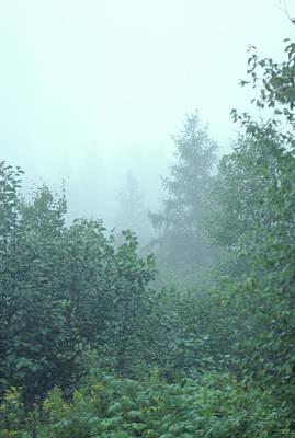 Photograph - Woodland Fog by Bernard Lynch