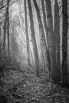 Photograph - Woodland Fog by Bruce Pritchett