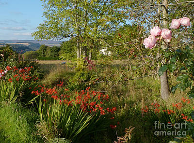 Photograph - Garden In Early Autumn by Phil Banks