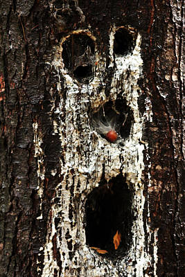 Photograph - Woodland Ghoul by Debbie Oppermann