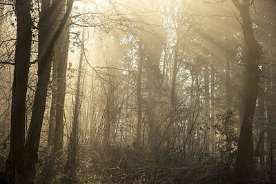 Photograph - Woodland Glade 2 by Clare Bambers