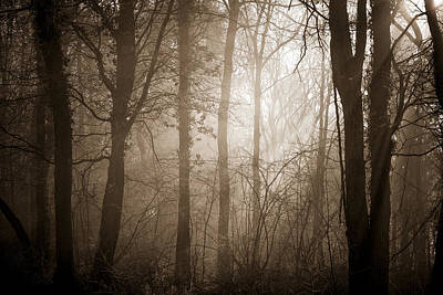 Photograph - Woodland Glade 3 by Clare Bambers