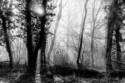 Photograph - Woodland Glade  by Clare Bambers