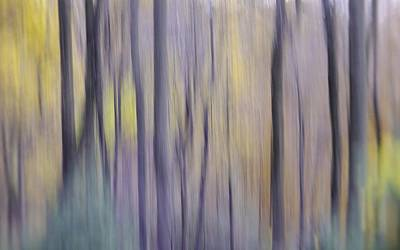 Photograph - Woodland Hues by Bernhart Hochleitner