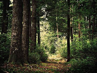 Photograph - Woodland Hush by Joy Nichols