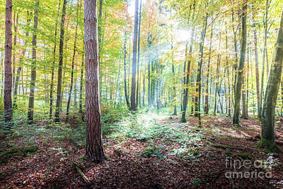 Photograph - Woodland In Fall by Hannes Cmarits