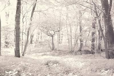 Woodland Art Print