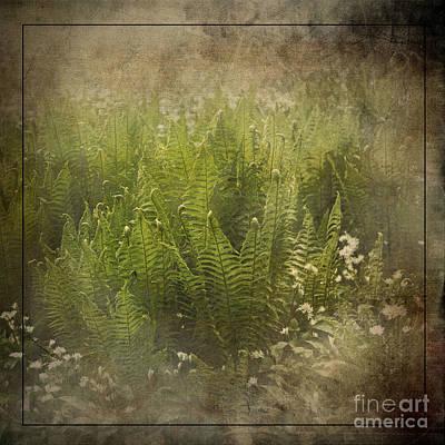 Photograph - Woodland Light by Liz Alderdice