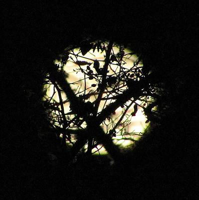 Moon Photograph - Woodland Moon by Julie Pacheco-Toye