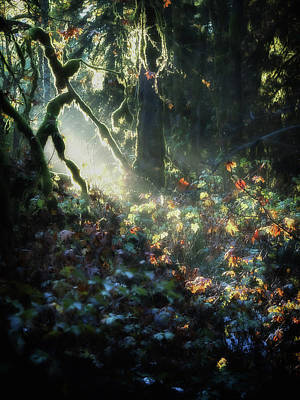 Photograph - Woodland Mystery by Lynn Wohlers
