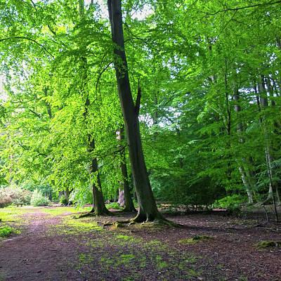 Photograph - Woodland Path by Anne Kotan