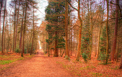 Photograph - Woodland Path by Chris Day