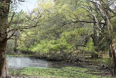 Photograph - Woodland Pond by rd Erickson