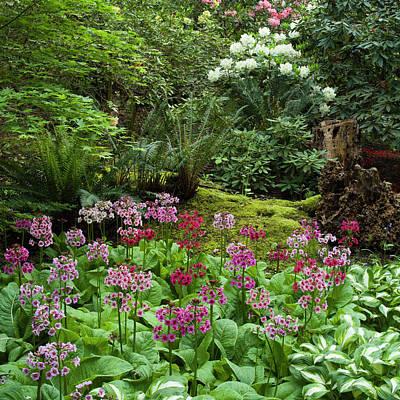 Photograph - Woodland Primula by Adam Gibbs