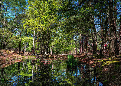 Photograph - Woodland Reflections by Framing Places