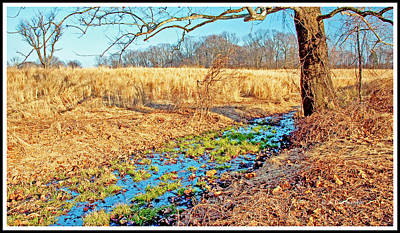 Photograph - Woodland Rivulet In Fall by A Gurmankin