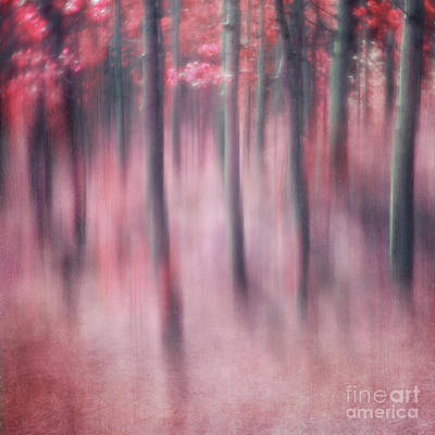 Altered Photograph - Woodland Sanctuary by Priska Wettstein