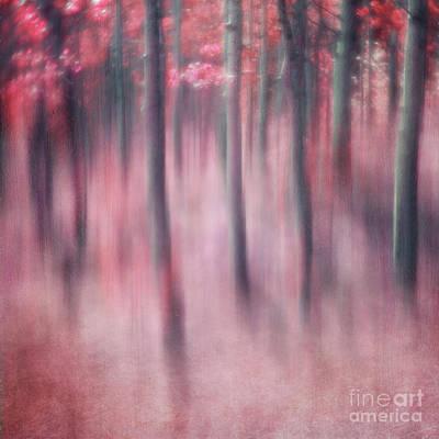 Photograph - Woodland Sanctuary by Priska Wettstein
