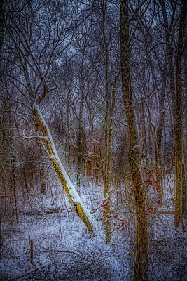 Photograph - Woodland Snowfall by Barry Jones