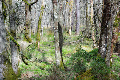 Photograph - Woodland  by Steven Poulton